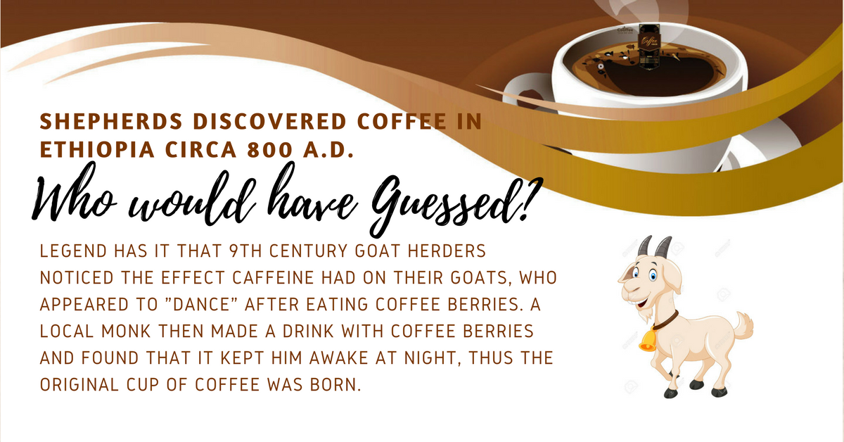 A Brew Note #1 Coffee Discovery!!